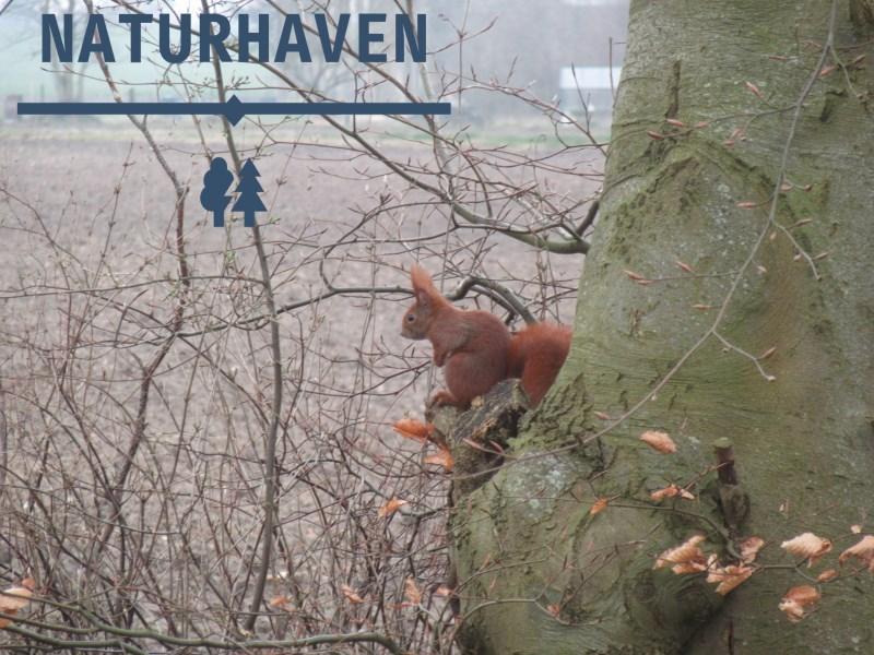Naturhavens logo på YouTube, indeholdende et egern