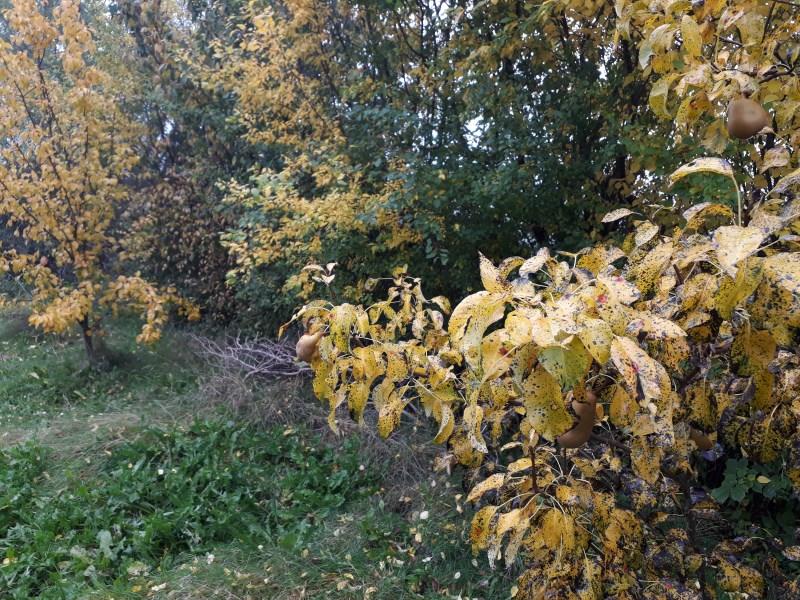 Gyldne blade på træerne