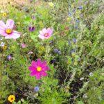 Vild blomstereng
