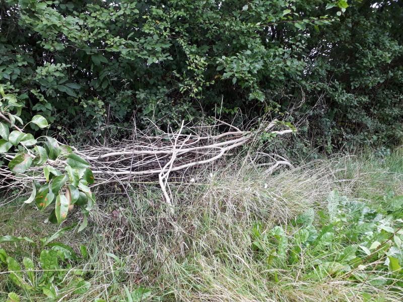 Kvasbunke i en vild have
