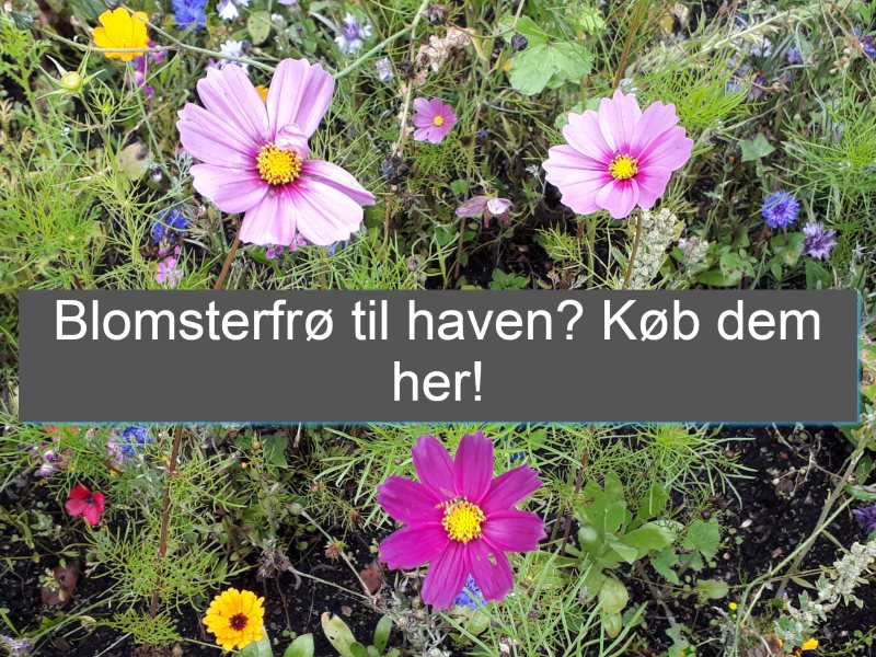 Blomsterfrø til haven