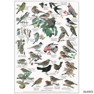 Billige naturplakater