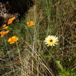Blomstereng i vild have