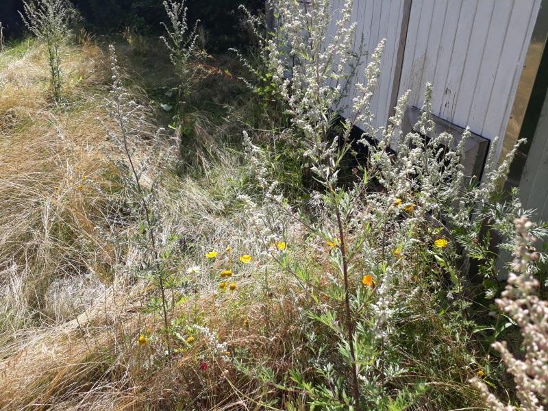 Lav en blomstereng
