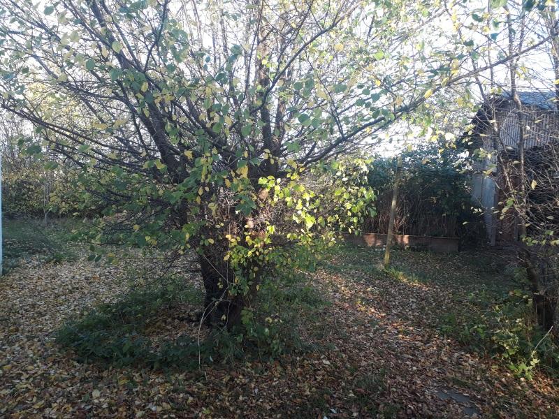 Efterår i vild og naturlig have