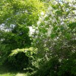 Forår i vild have