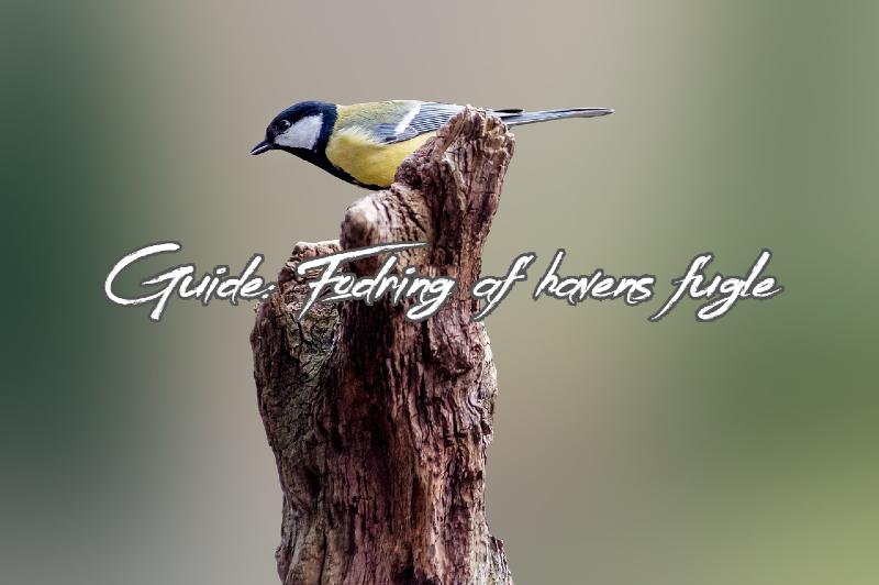 Guide til fodring af fugle