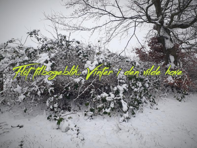 Vinter i den vilde have