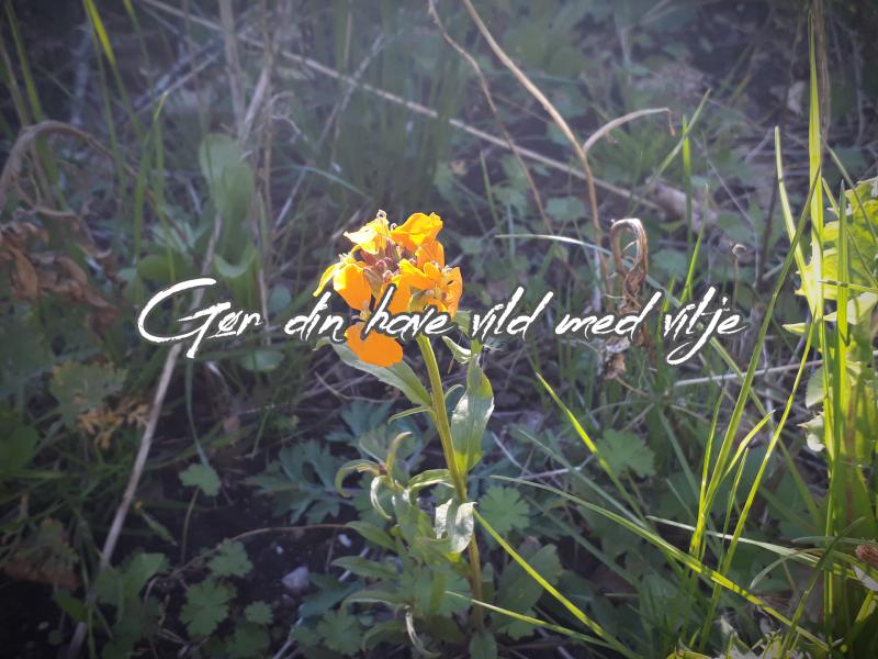 Vild med vilje have