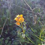 Vilde blomster i naturlig have