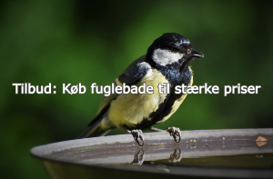 Fuglebade tilbud