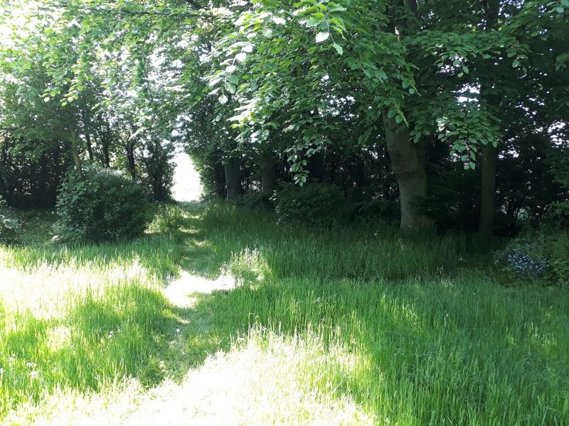 Skovstykke i haven