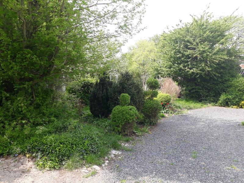 Buske og træer i vild have