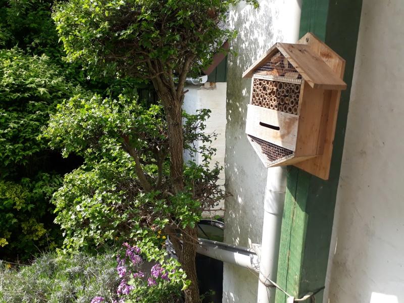 Insekthotel i vild og naturlig have