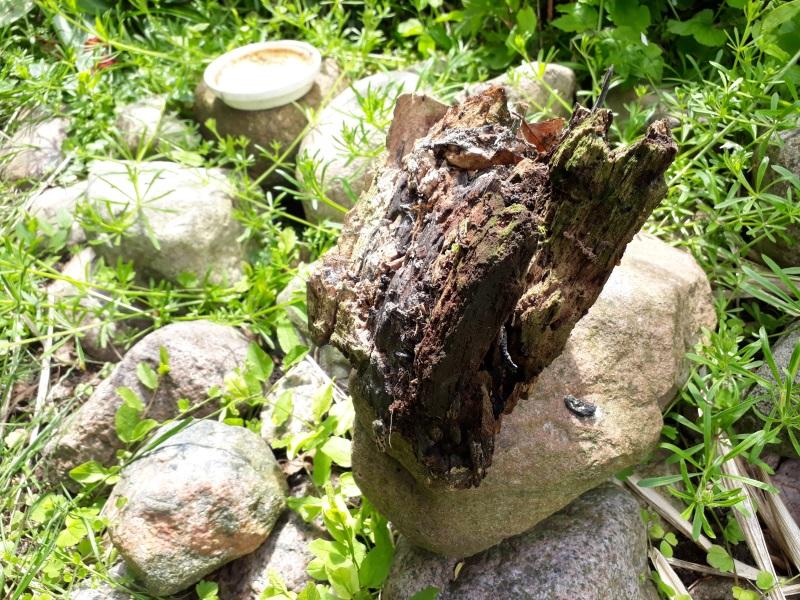 Sten og dødt ved i haven