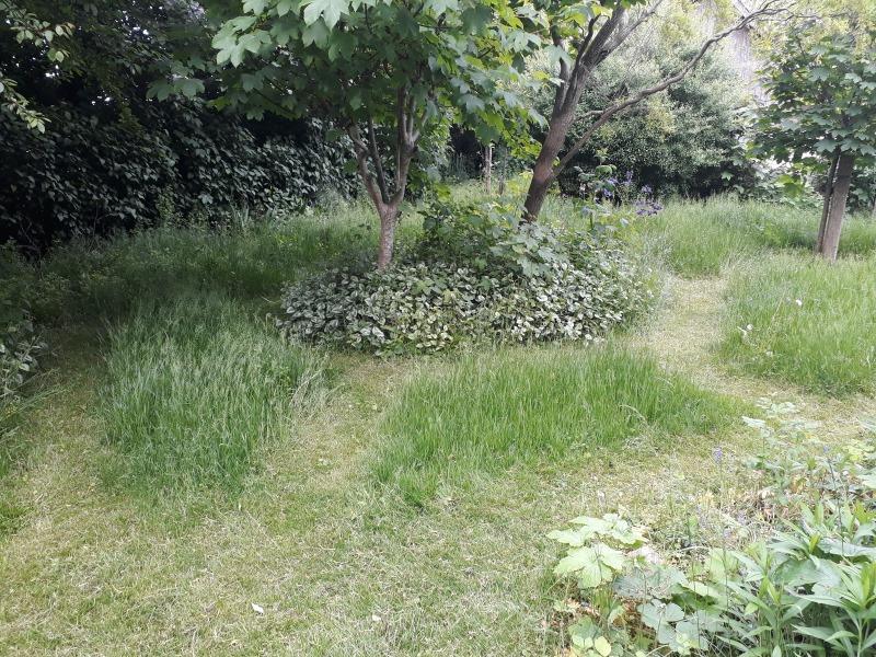 Stier gennem græsset i haven