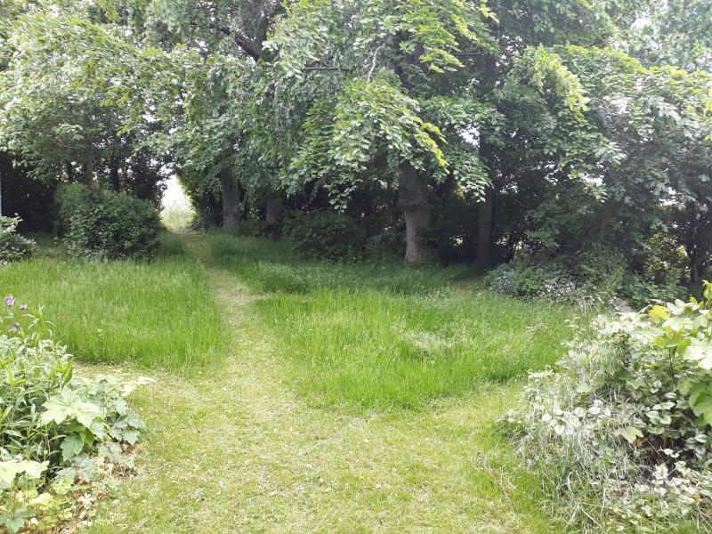Vild skov i haven