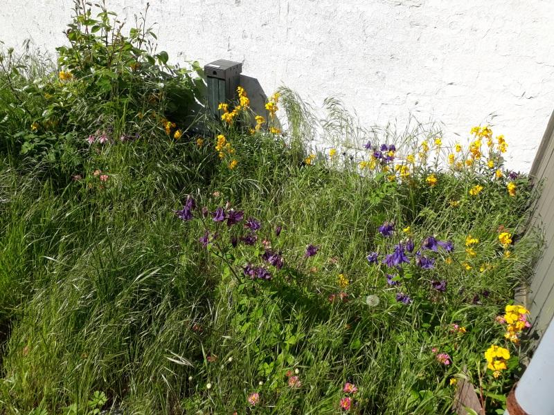 Vilde naturlige blomster i haven