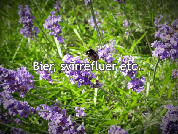 Alt om havens bier og fluer