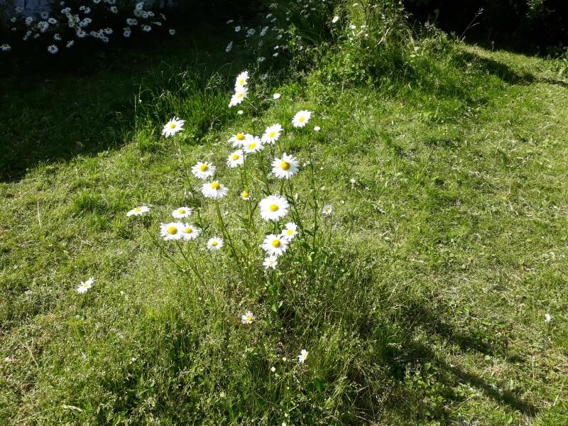 Blomsterbede i vild have