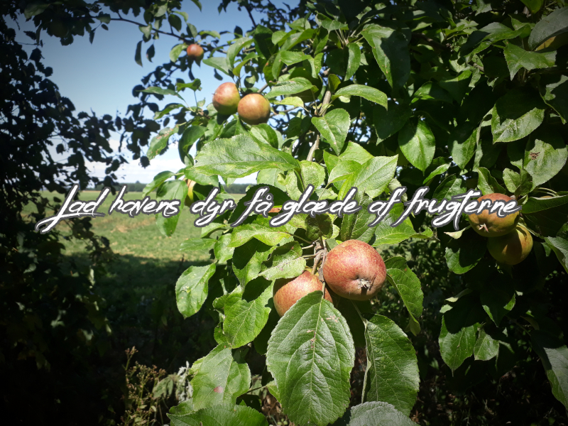 Frugt og dyr i haven
