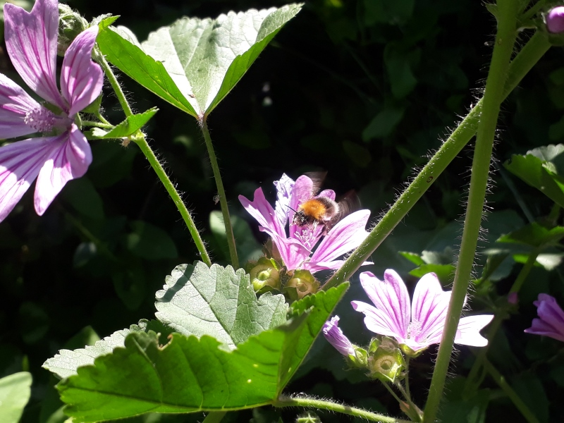 Katost blomster i haven