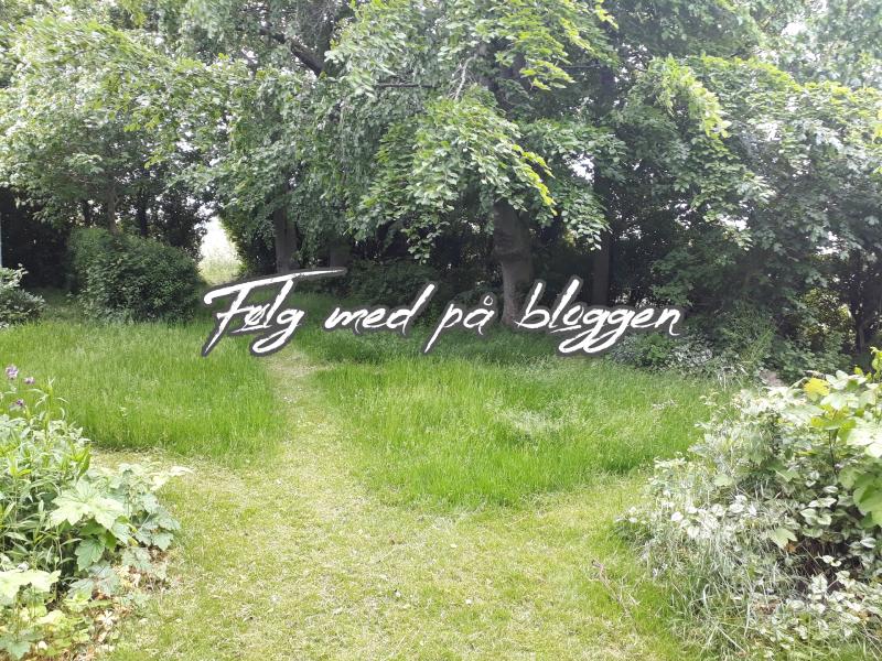 Blog om vilde haver